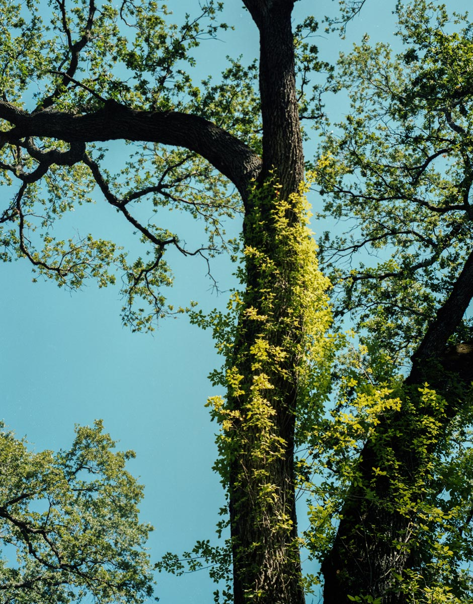 TREE #39